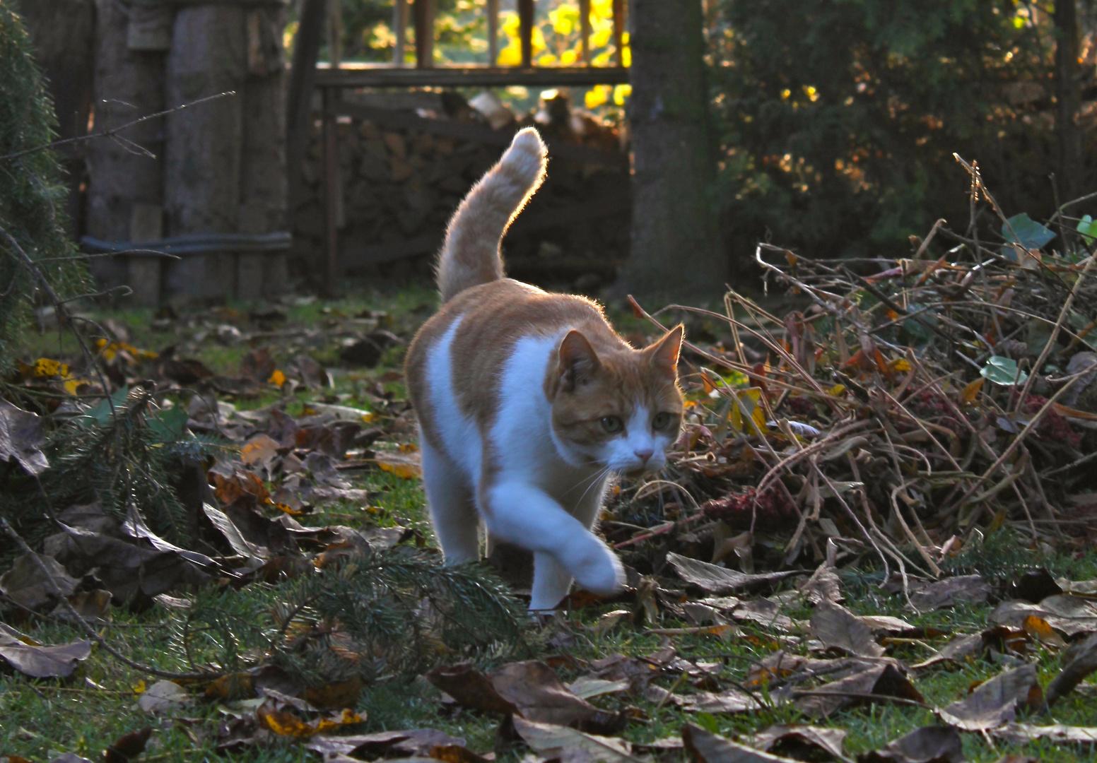 Katze Herbstimpression