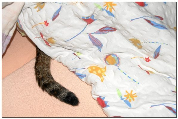 Katze im Bett ?