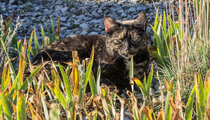Katze im Britzer Garten