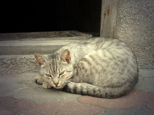Katze im Dämmerlicht