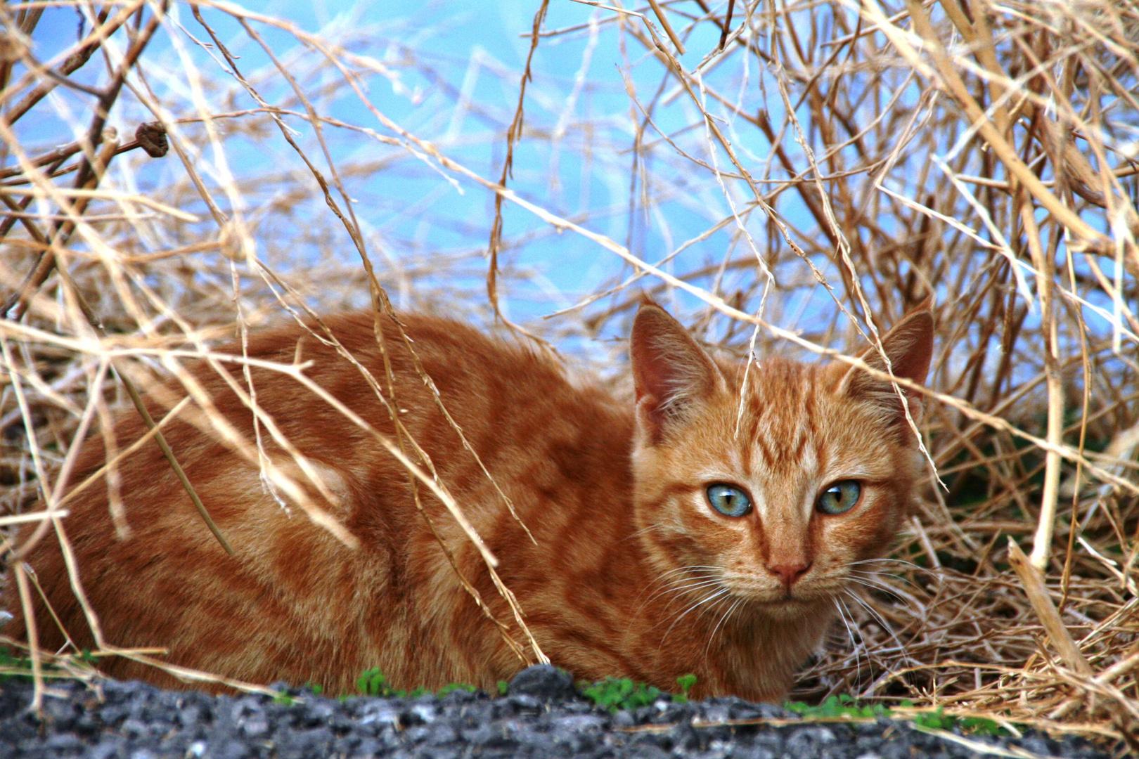 Katze im Dickicht