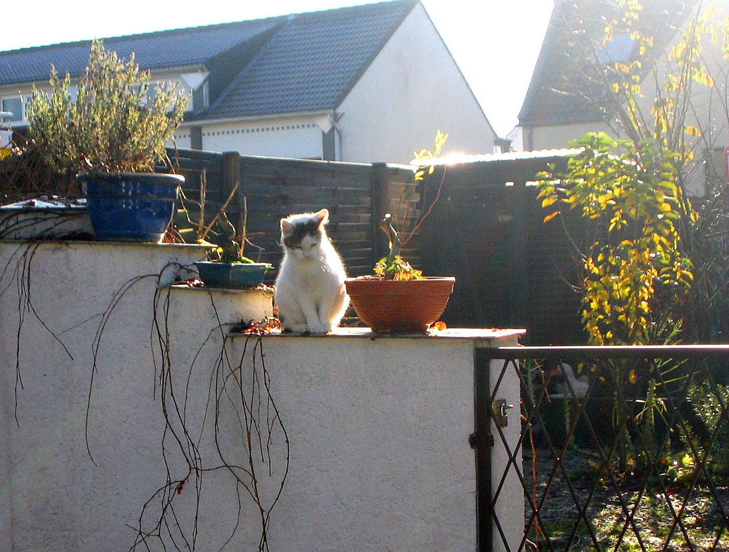 Katze im Gegenlicht