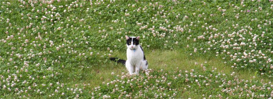 Katze im Glück (-s Klee)