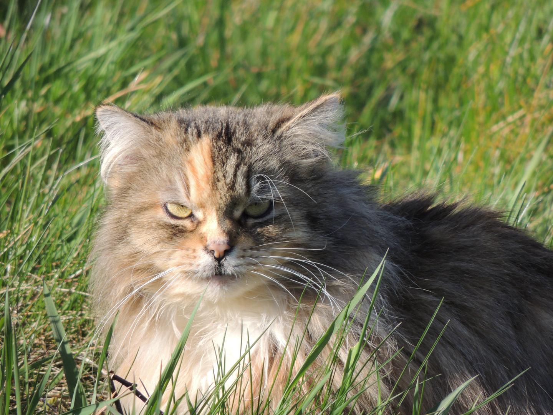 Katze im Gras II
