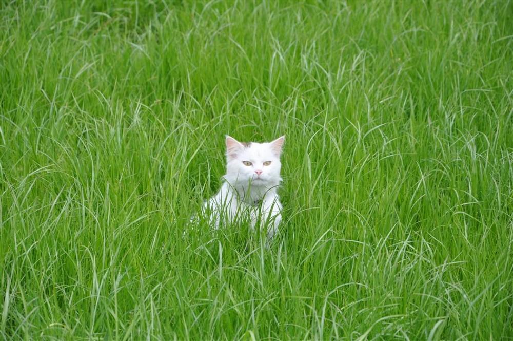 Katze im Grünen