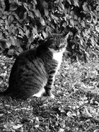 Katze im Herbst