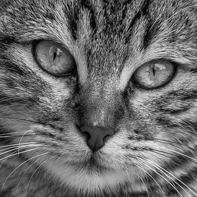 Katze im Hotel Limak