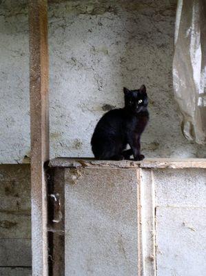 Katze im Kuhstall!