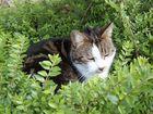 """Katze im """"Nest"""""""