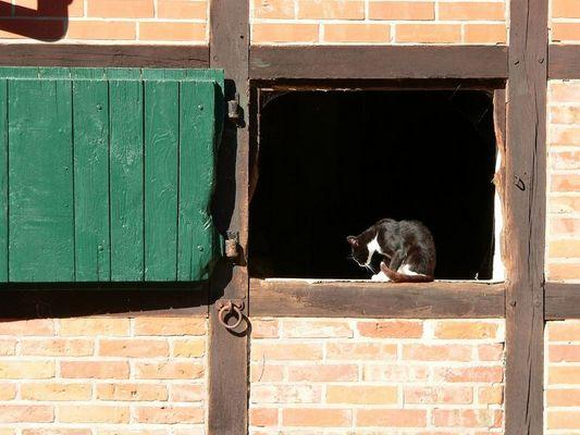 Katze im Pferdestall