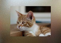 Katze im Rahmen