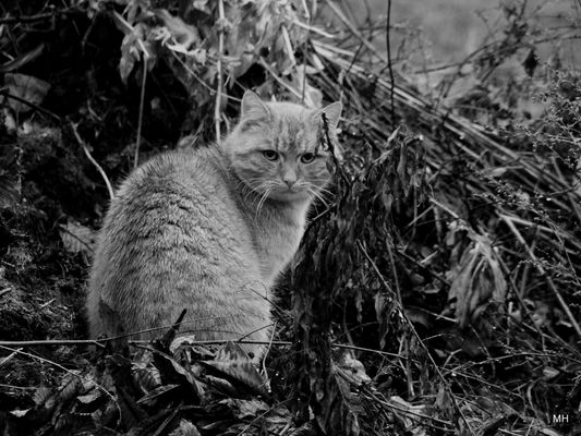 Katze im Regen