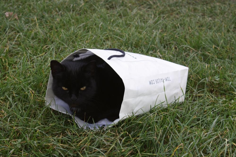 """Katze im Sack"""