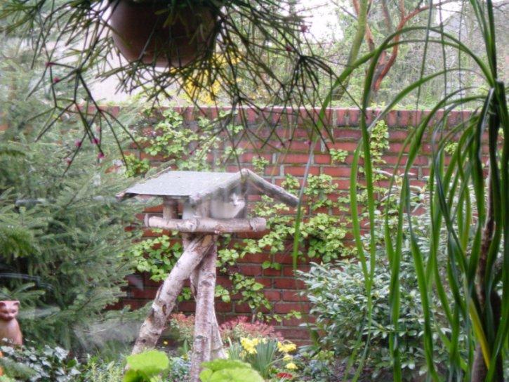 Katze im Vogelhaus