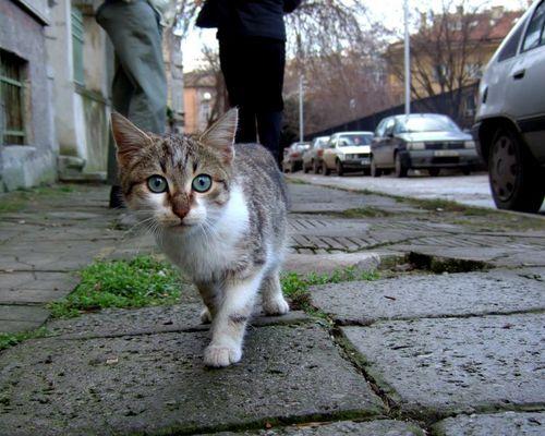 Katze in Bulgarien