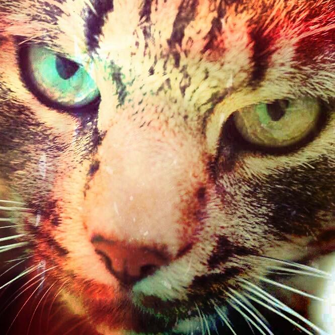 Katze in Bunt.