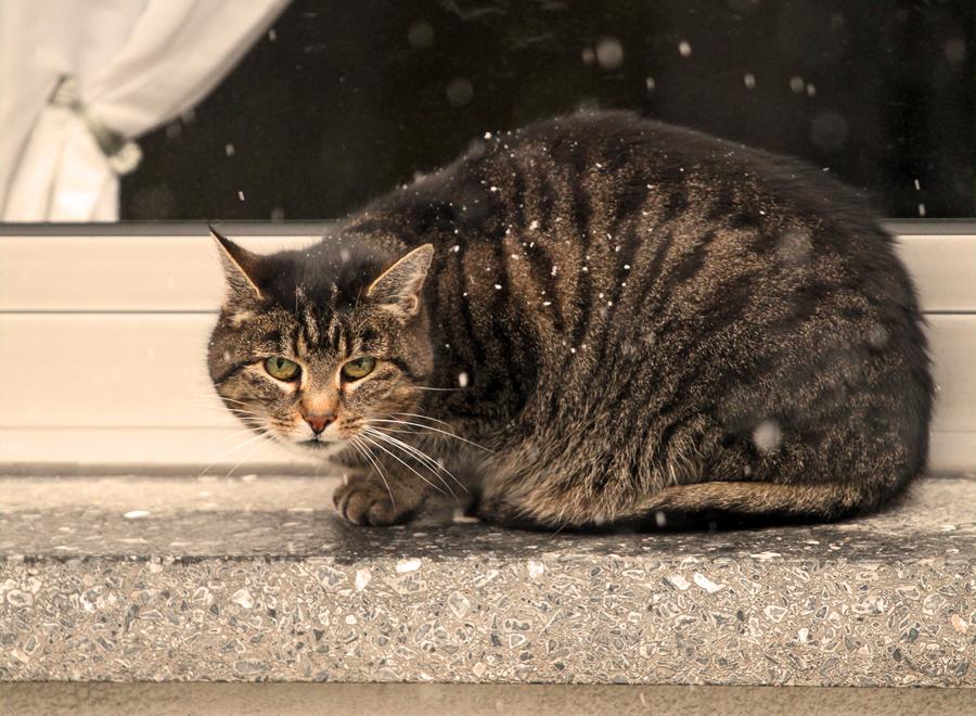 Katze in der Fensterbank..