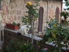 Katze in der Toscana