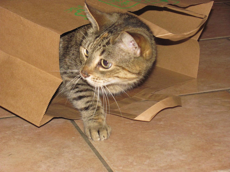 Katze in der Tüte