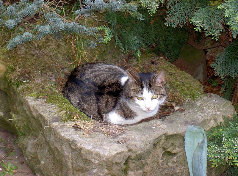 Katze in der Vogeltränke
