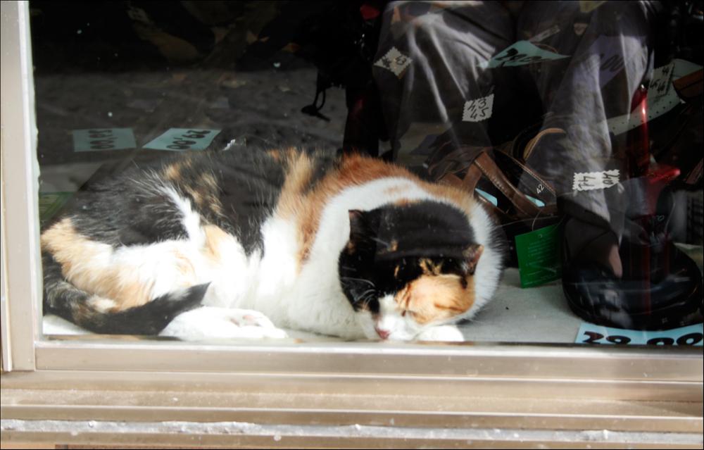 Katze in einem Schaufenster in Triest