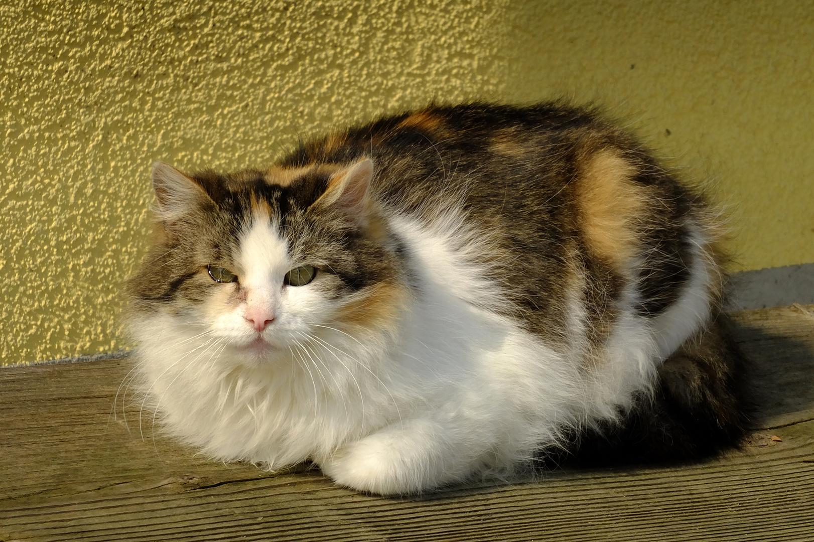 Katze in Glück auf der Lauer....