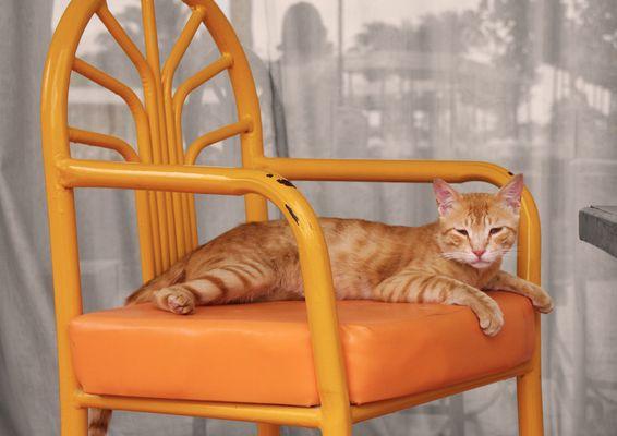 Katze in Hurghada