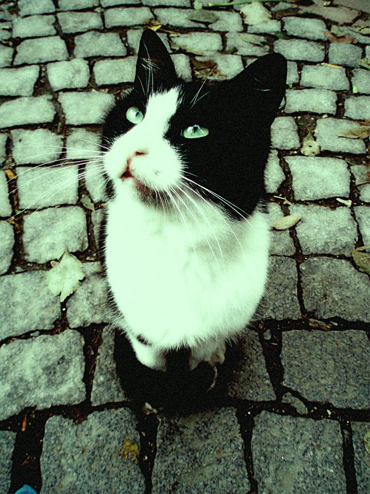 Katze in Istanbul