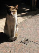 Katze in Kairo
