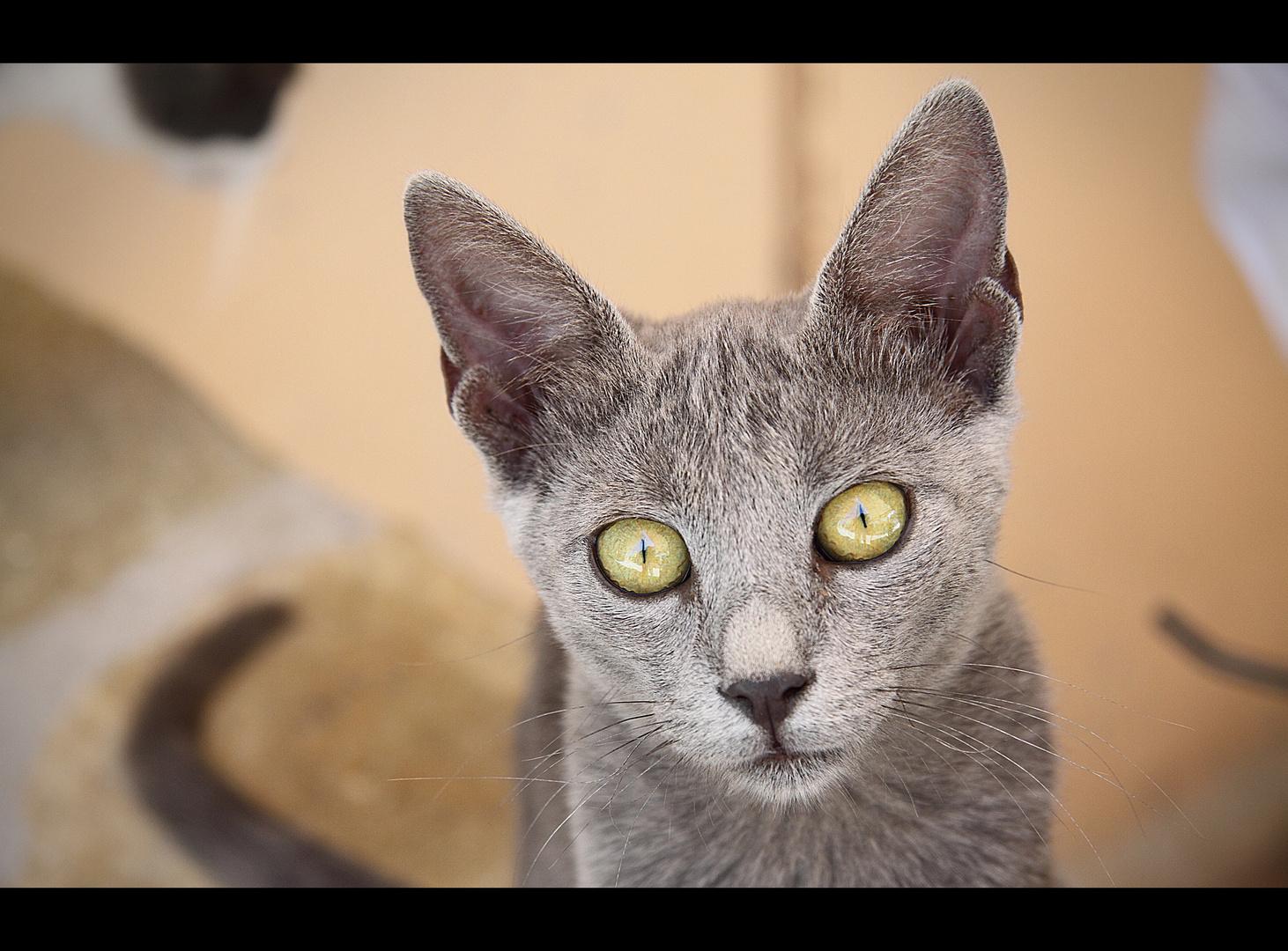Katze in Kreta