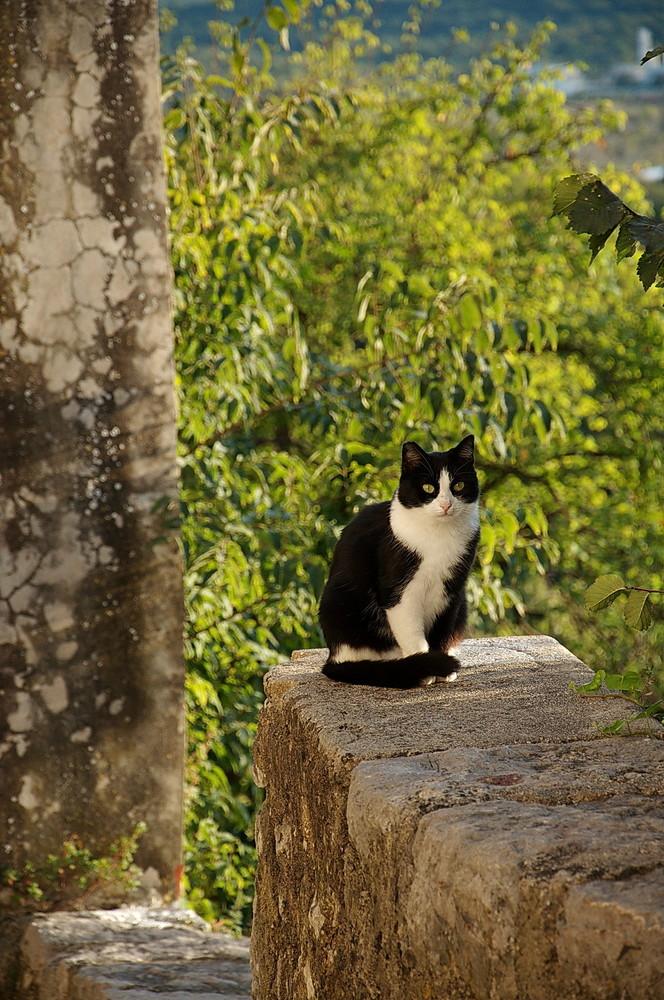 Katze in Omisalj auf der Insel Krk