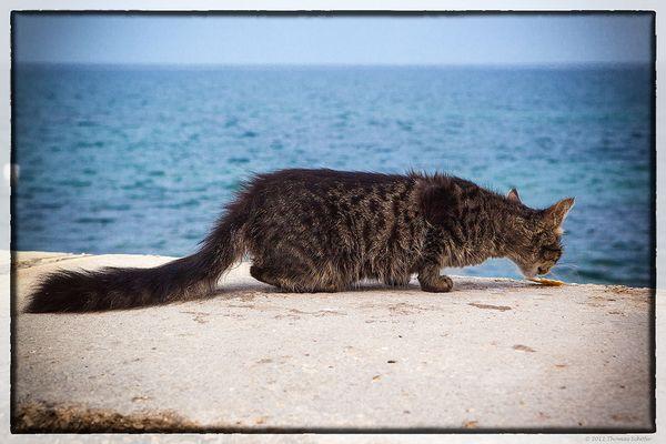 Katze in Porec