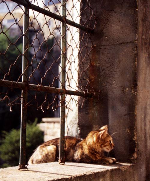 Katze in Porto, Portugal