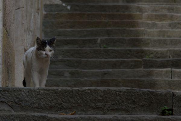 Katze in Pula