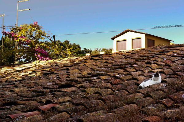 Katze in Rom