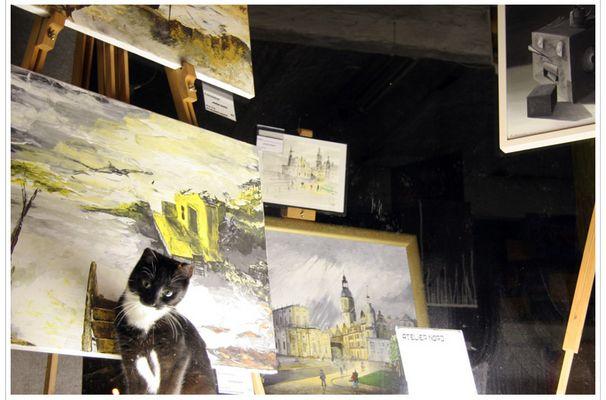 Katze in Schaufenster
