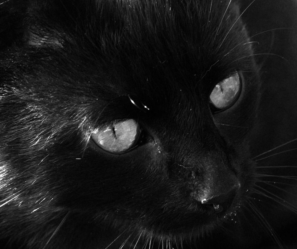 Katze in s/w