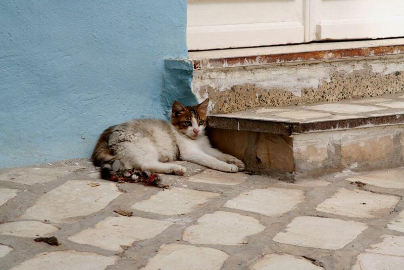 Katze in Tunesien 2