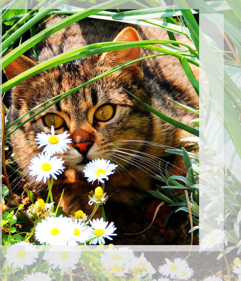 Katze - Kater Felix