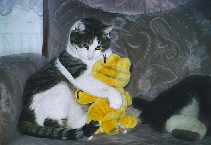 Katze liebt Katze