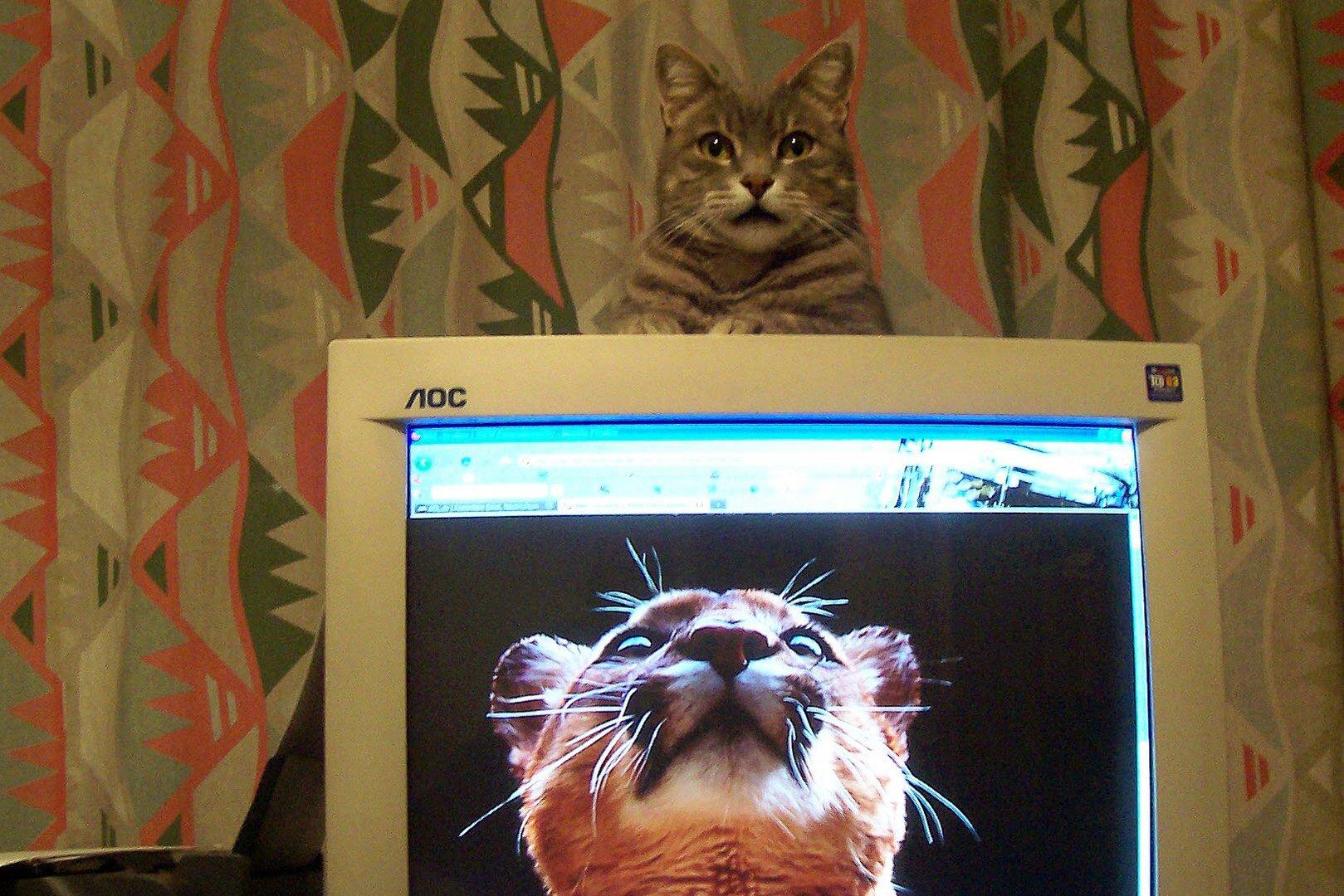 Katze Lilly immer oben