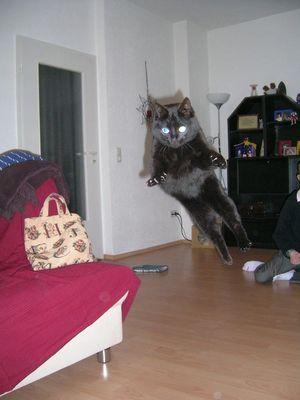 """Katze Loona ist sehr sportlich """"Sprungphase"""""""