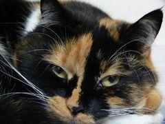 Katze Lucy #1