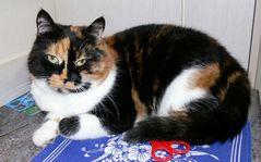 Katze Lucy #2