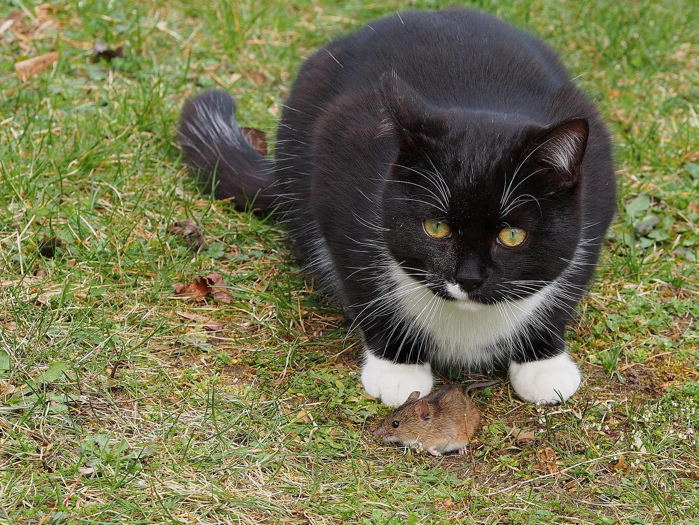 Katze & Maus Spiel