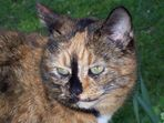 Katze (Mimi)