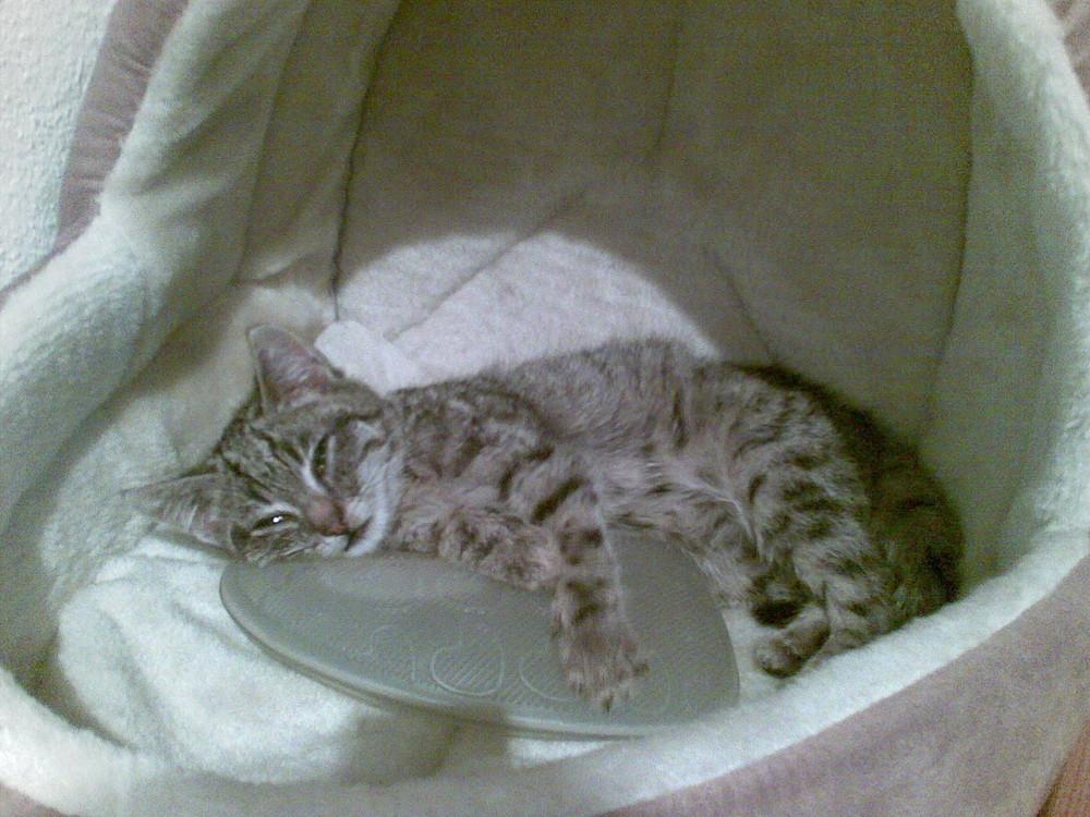 Katze mit 6.Wochen
