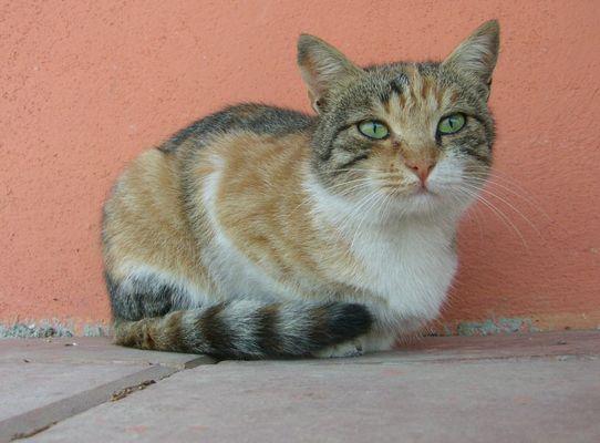 Katze mit Fernblick...