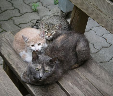 Katze mit Jungen