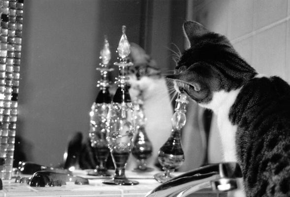 Katze Momo erkundet das Bad